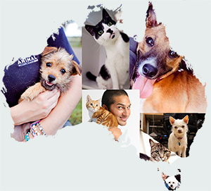 Animal Welfare League Australia Animal Welfare League Australia