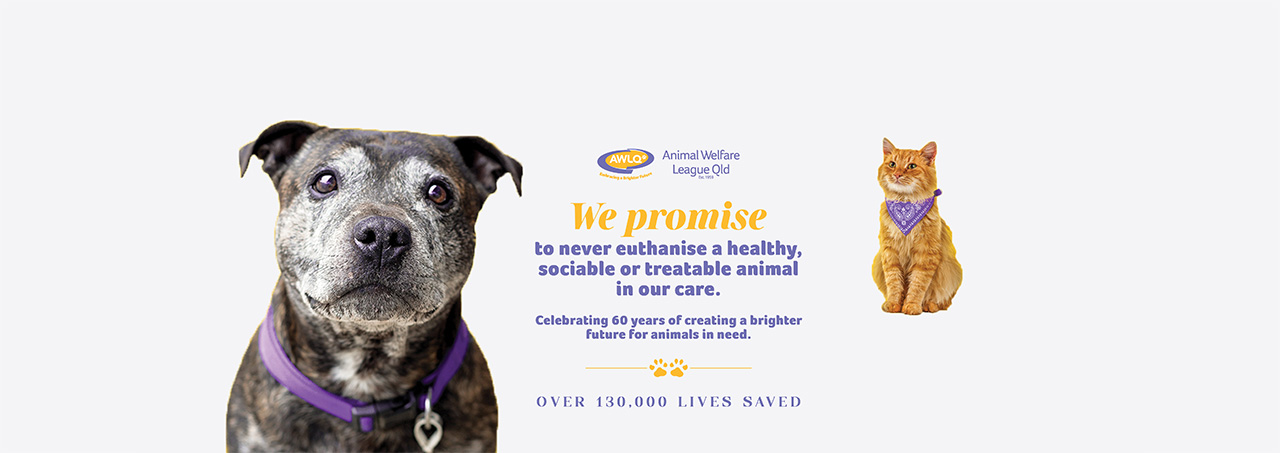 Queensland Animal Welfare League Australiaanimal Welfare League Australia